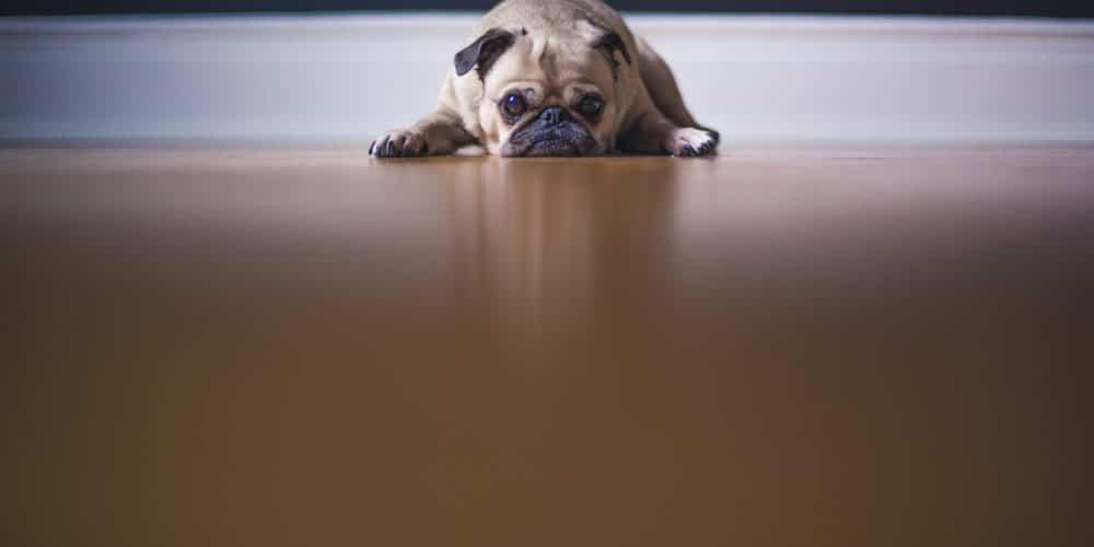 szomorú kutya vár